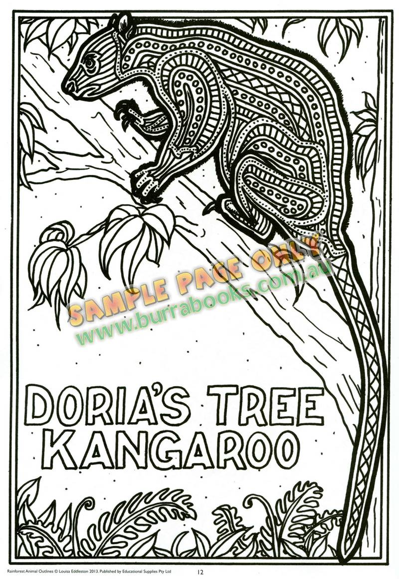 Rainforest Animal Outlines Burrabooks Australian